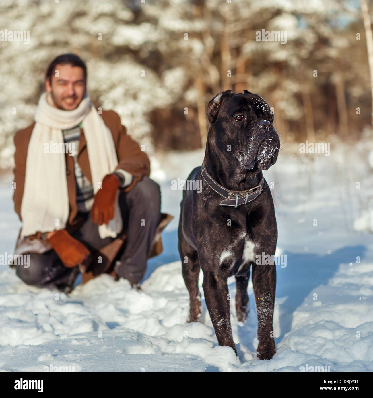 man playing with his dog outdoors Stock Photo