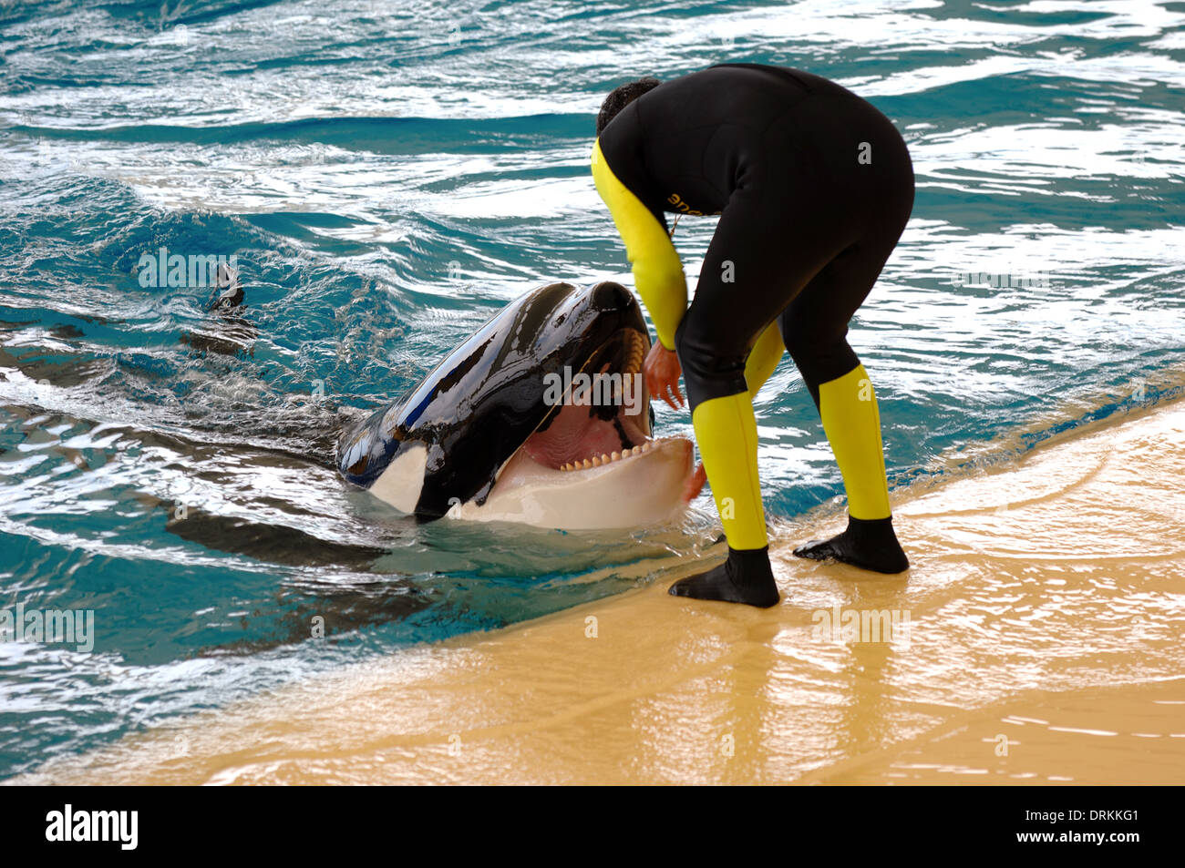 Man and killer whale by the water. - Stock Image