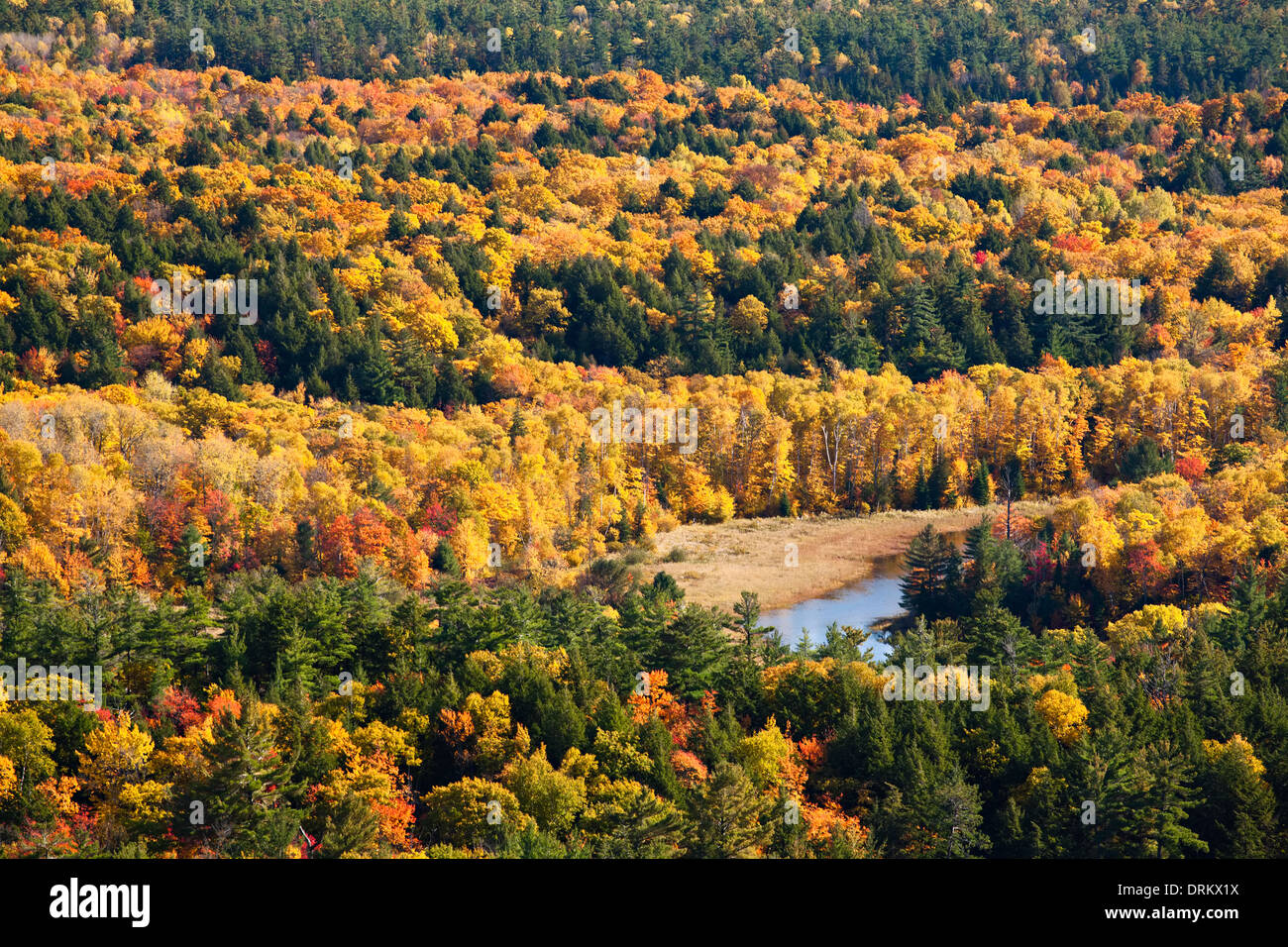 Wonderful yellows and oranges grace the tree canopy in Killarney Provincial Park, Ontario, Canada. - Stock Image