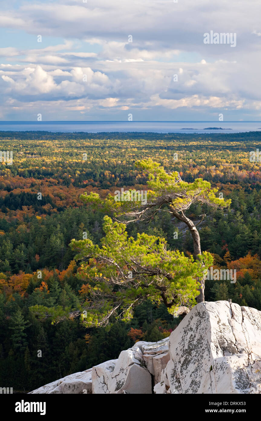 A lone windswept pine tree atop a rocky outcrop at 'The Crack' in Killarney Provincial Park, Ontario, Canada. - Stock Image