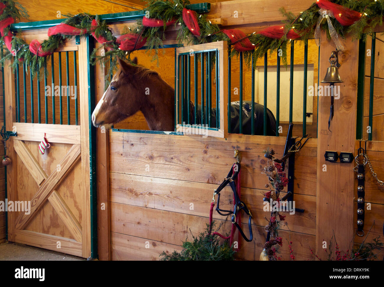 Appaloosa Horse In A Stall At Christmas Time Stock Photo Alamy