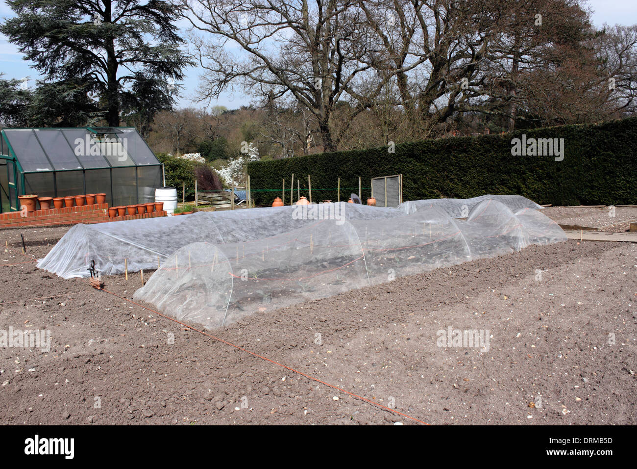 SEEDBEDS PROTECTED BY HORTICULTURAL FLEECE. - Stock Image
