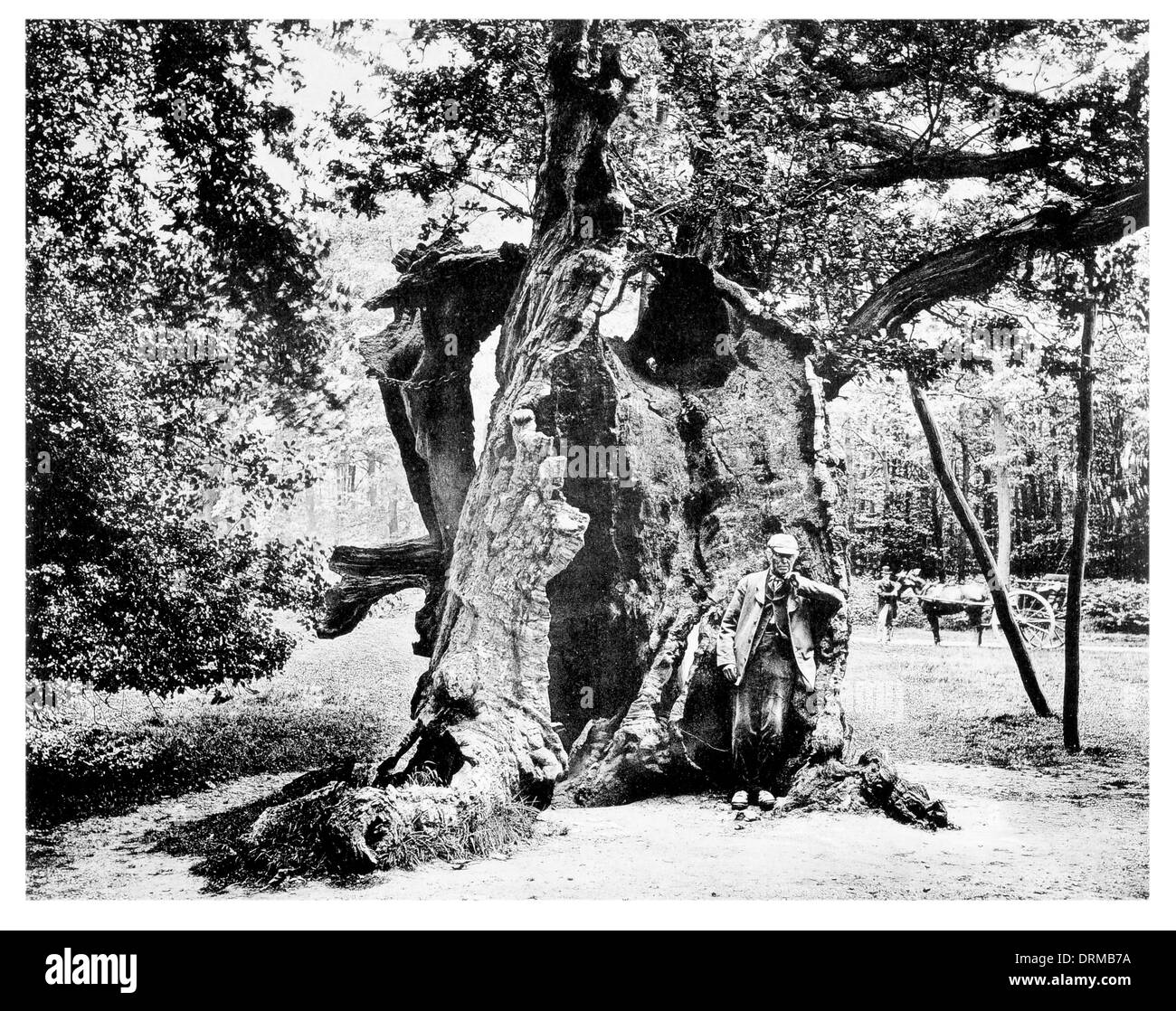 Robin Hood's Oak, Sherwood Forest Royal Forest in Nottinghamshire Photographed Circa 1910 Stock Photo