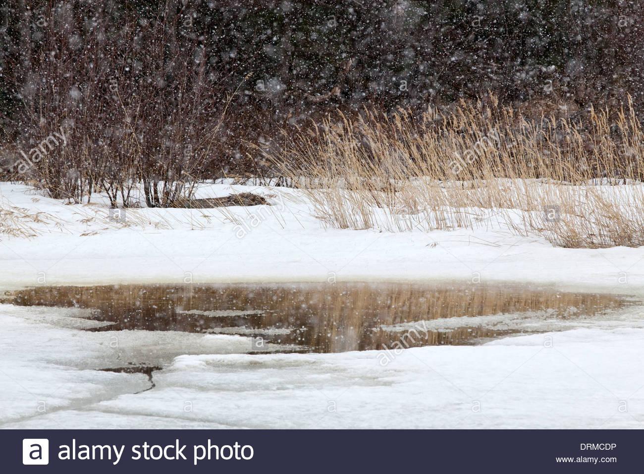 Sleet at late winter - Stock Image