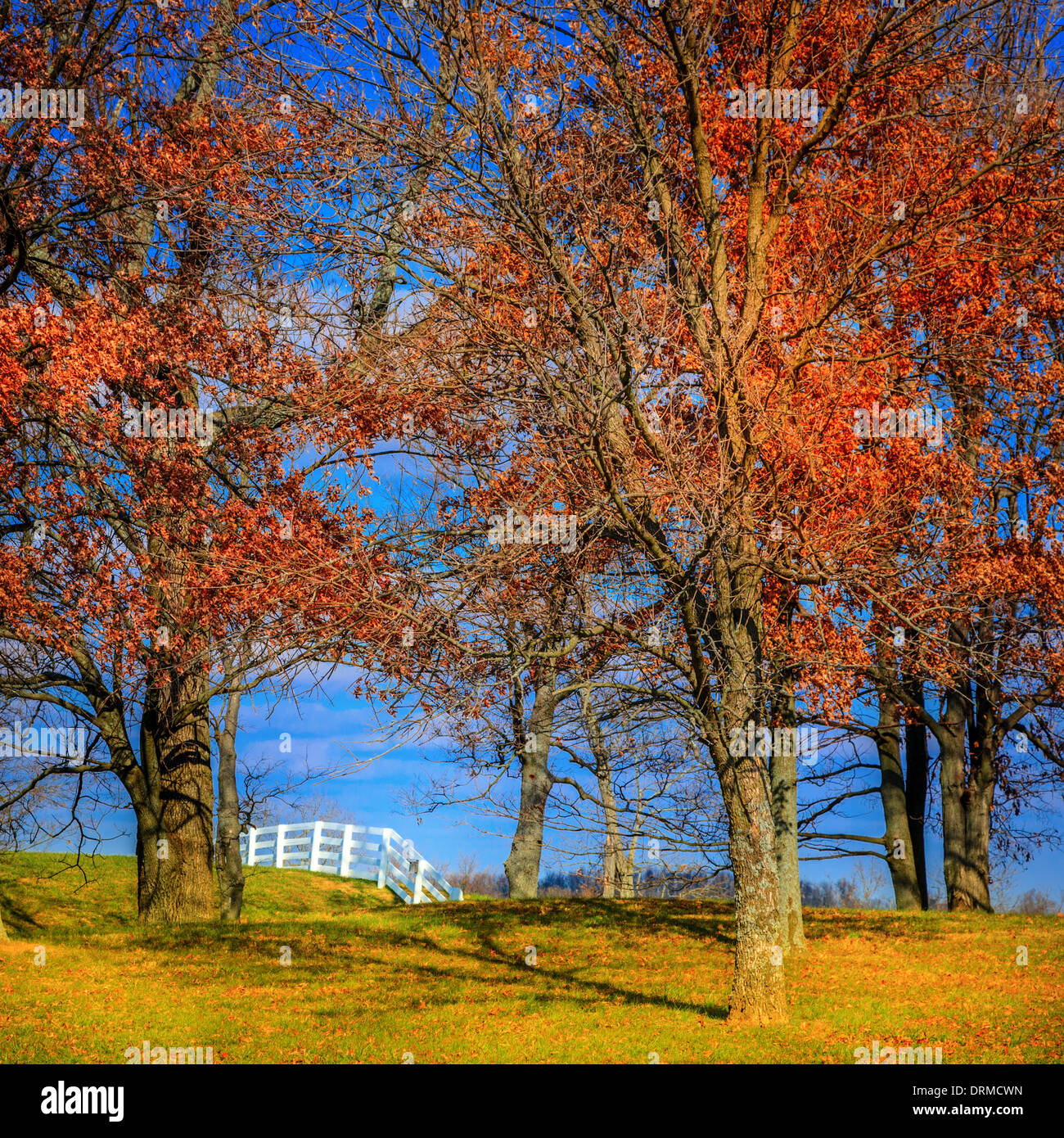 Horse farm fence behind the trees in Kentucky in fall - Stock Image