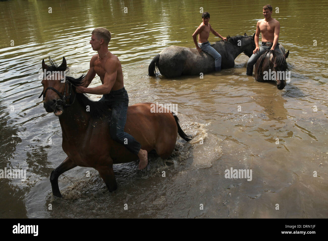 Horse bathing in a pond near Mozhaysk, Russia. Stock Photo