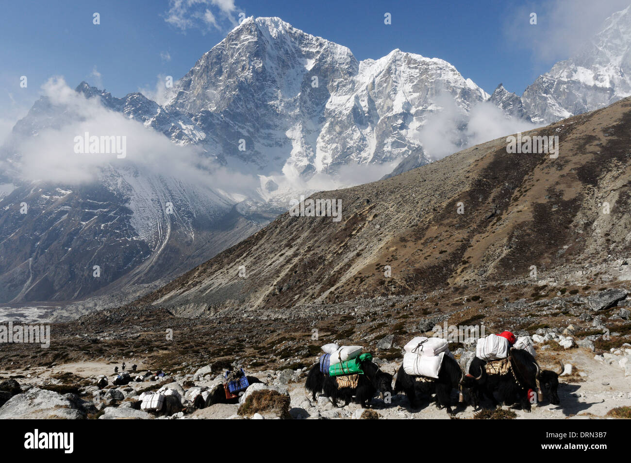 A yak train in the everest region of the himalayas with Taboche peak behind - Stock Image