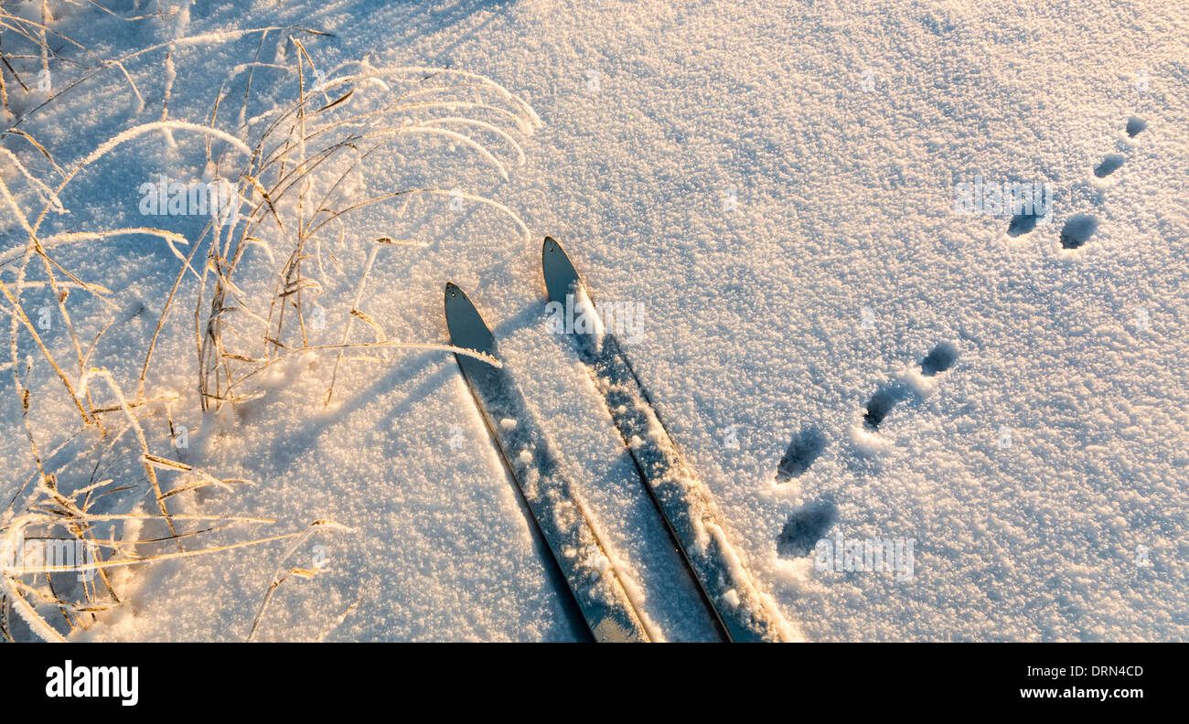 Ski track and hare tracks crossing in snow. - Stock Image