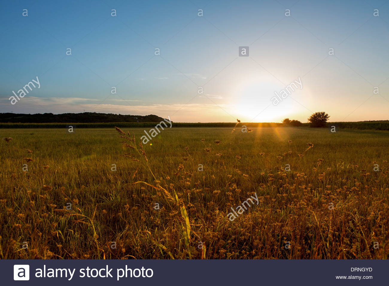Late summer sunset at meadow. - Stock Image