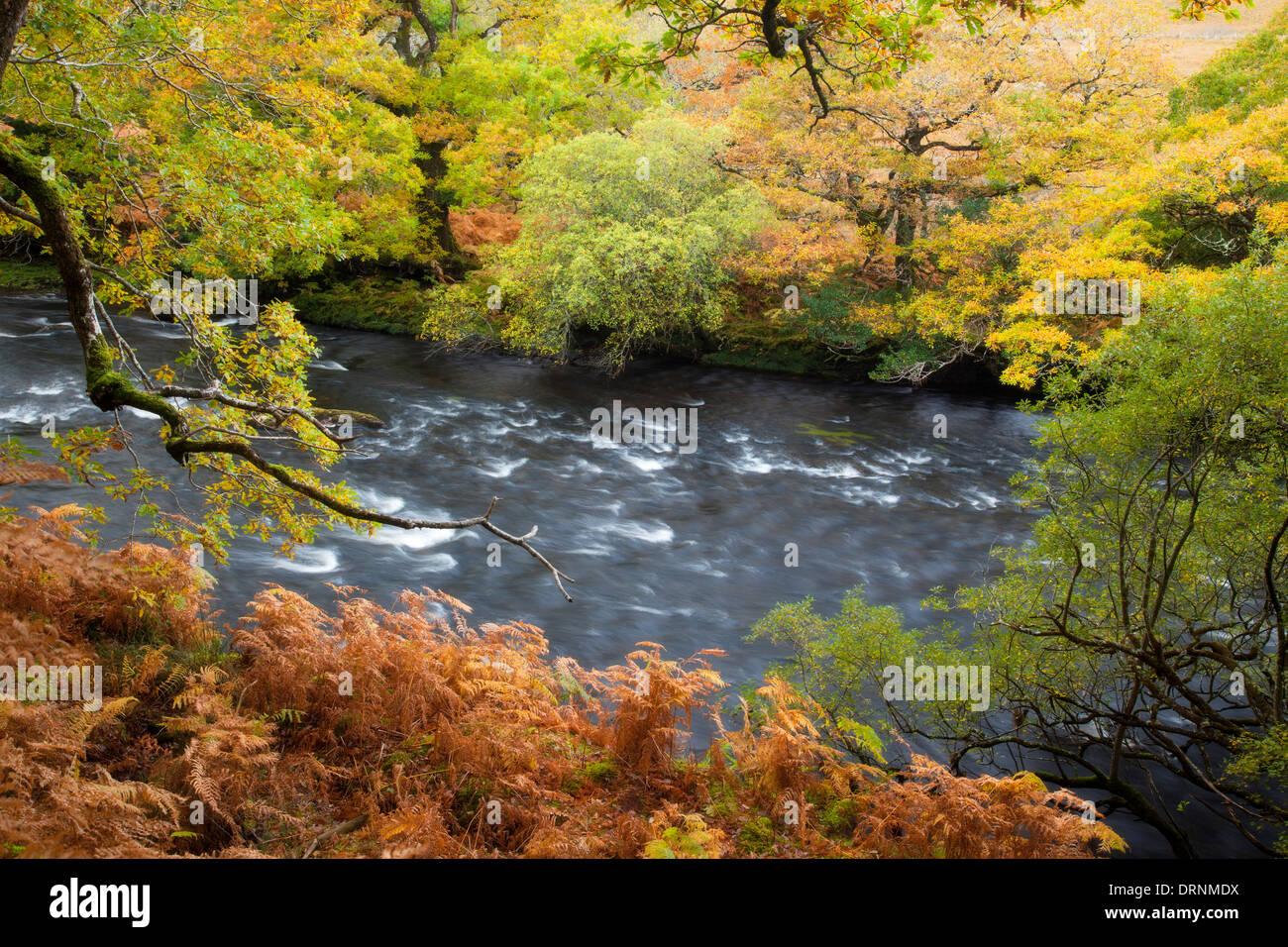 Autumn oak woodland along the Owenmore River, County Mayo, Ireland. - Stock Image
