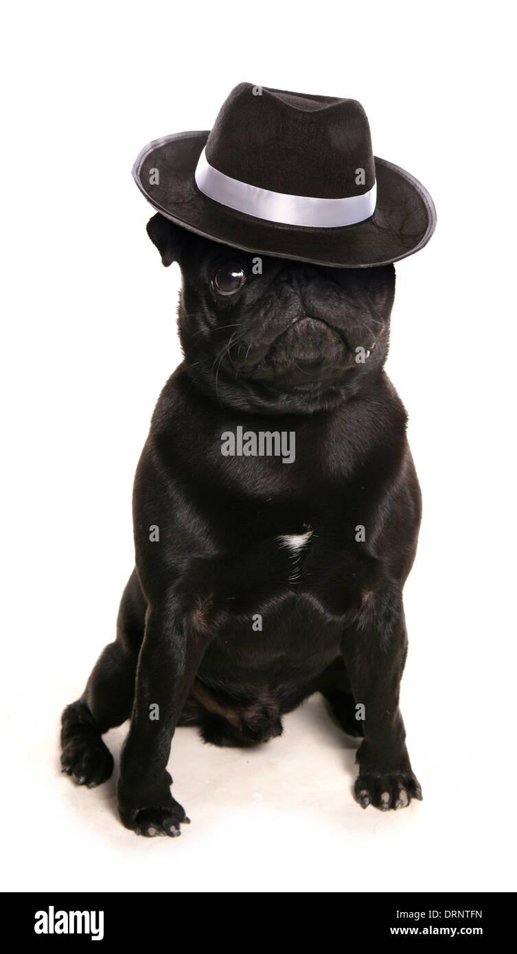 doggy dancing studio cutout - Stock Image