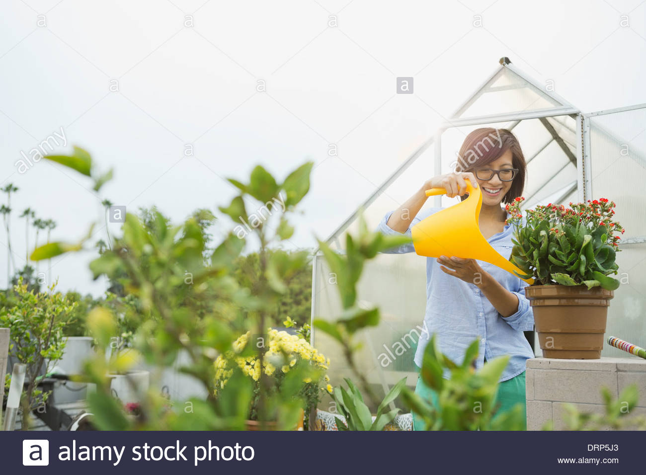 Woman watering flowers in greenhouse - Stock Image