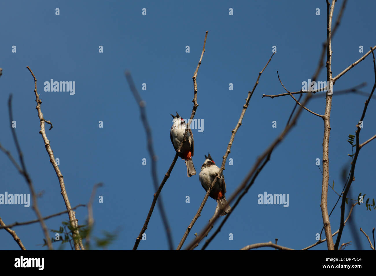 two birds sitting on a tree - Stock Image