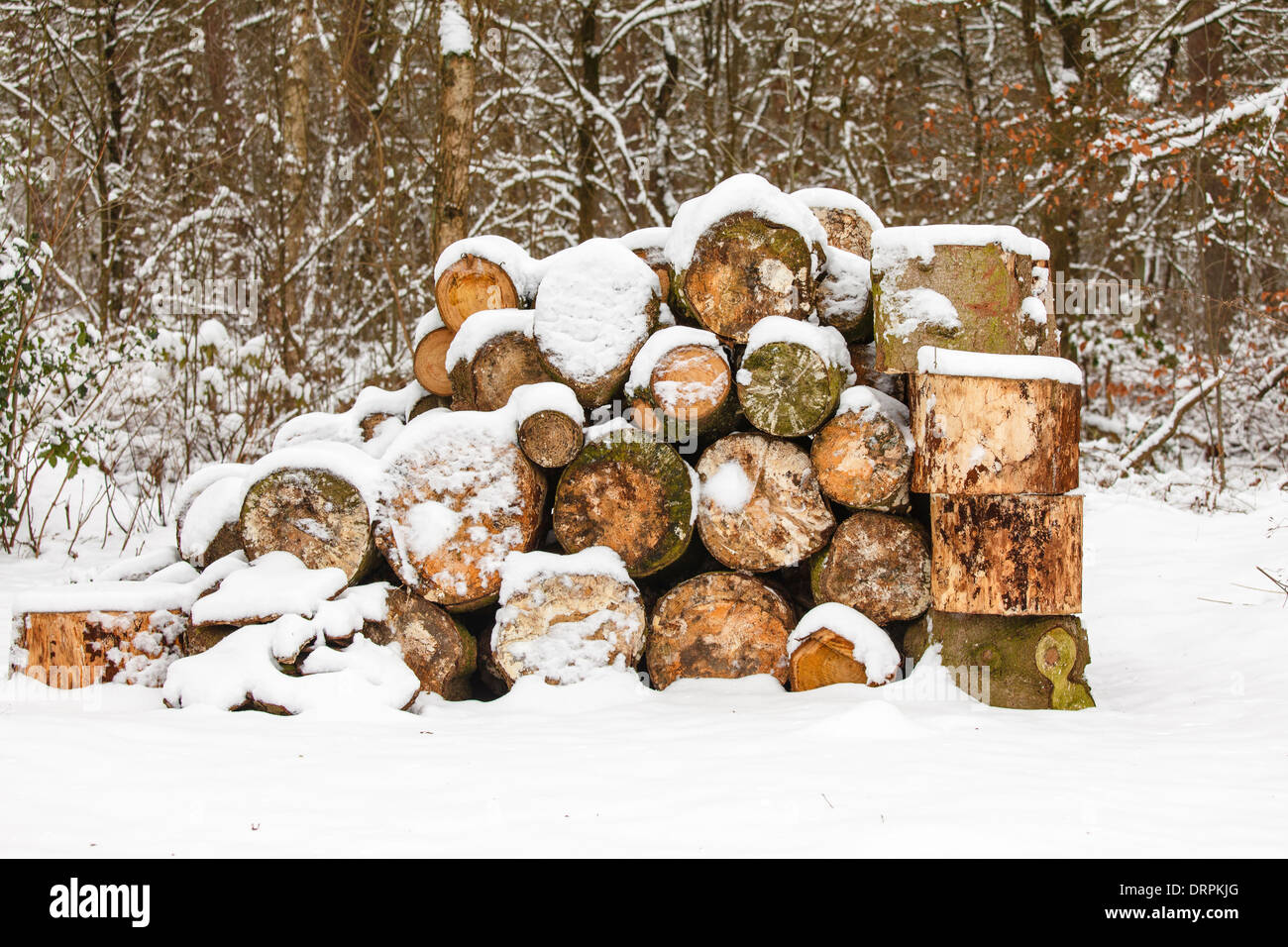 Firewood at the edge of the forest, snow Stock Photo