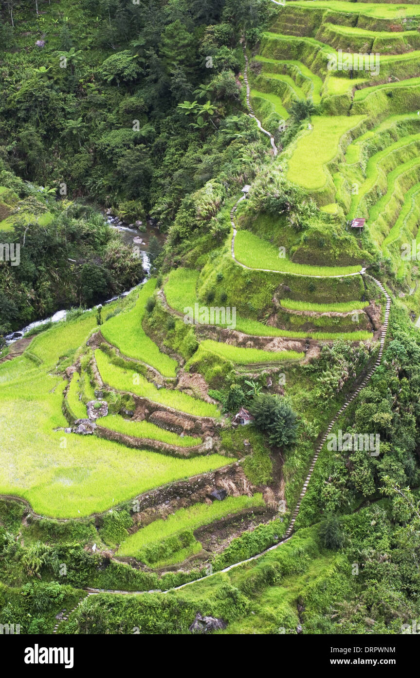 rice terraces, Banaue in Philippines. - Stock Image