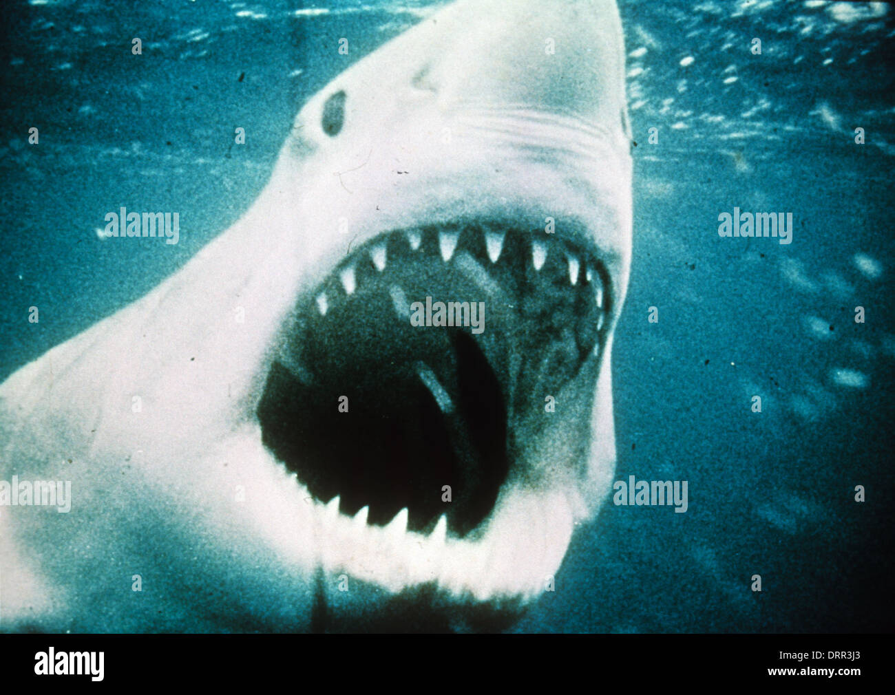 JAWS 1975 Universal Pictures film - Stock Image