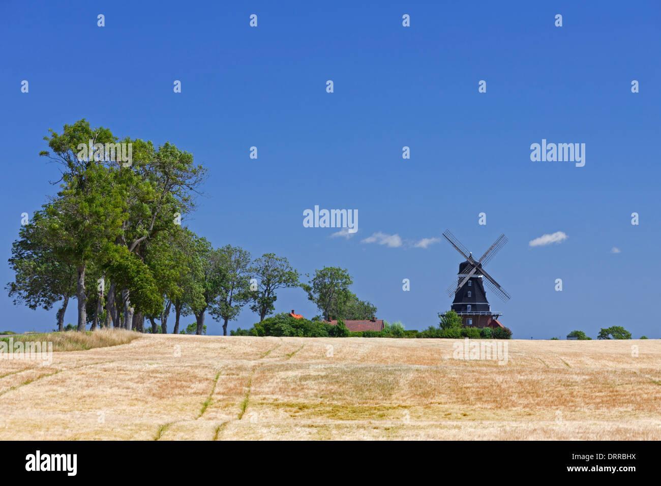 Traditional windmill in wheat field, Krageholm, Skåne / Scania, Sweden, Scandinavia - Stock Image