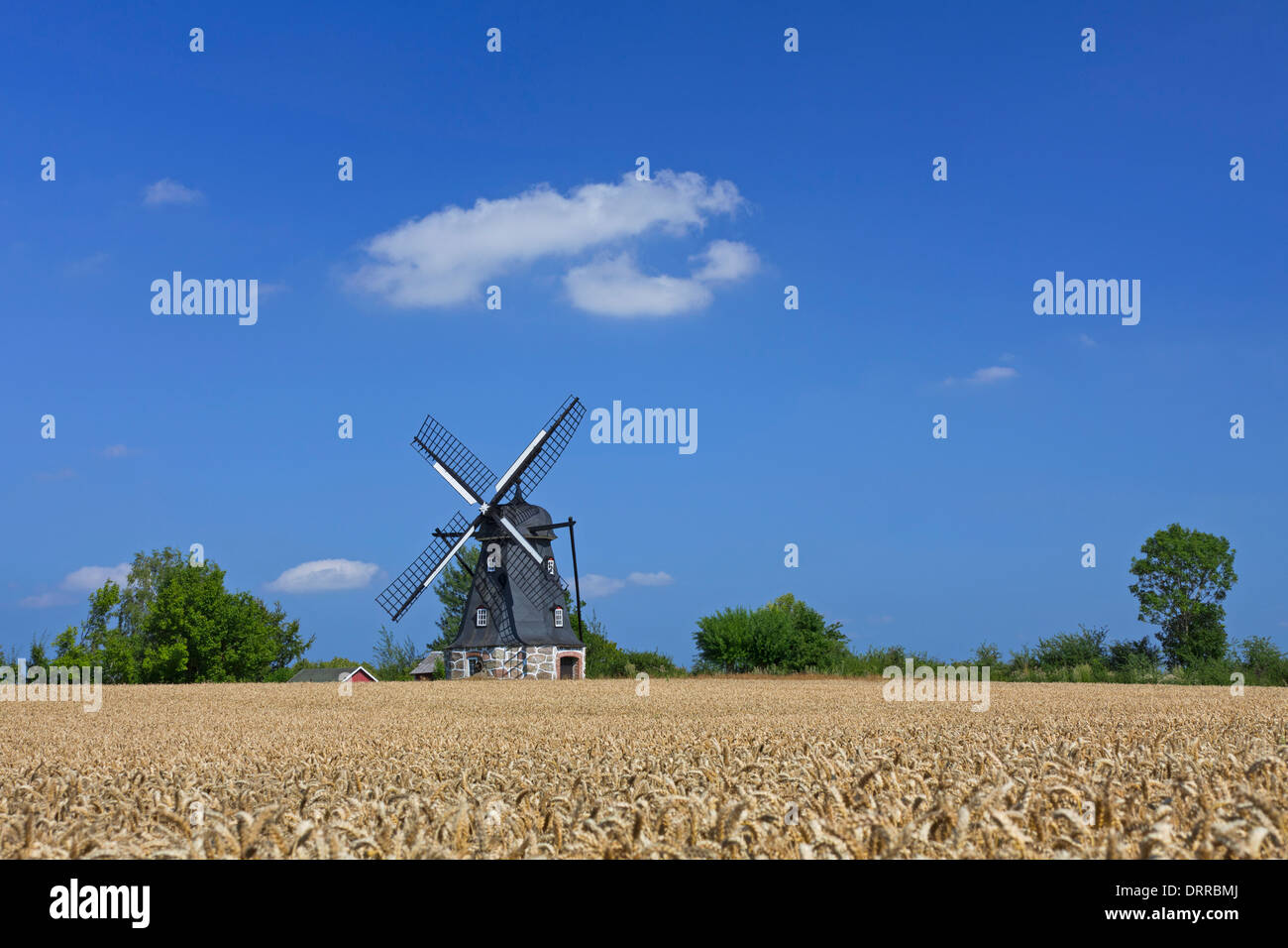 Traditional windmill in wheat field at Vanstad, Skåne / Scania, Sweden, Scandinavia - Stock Image
