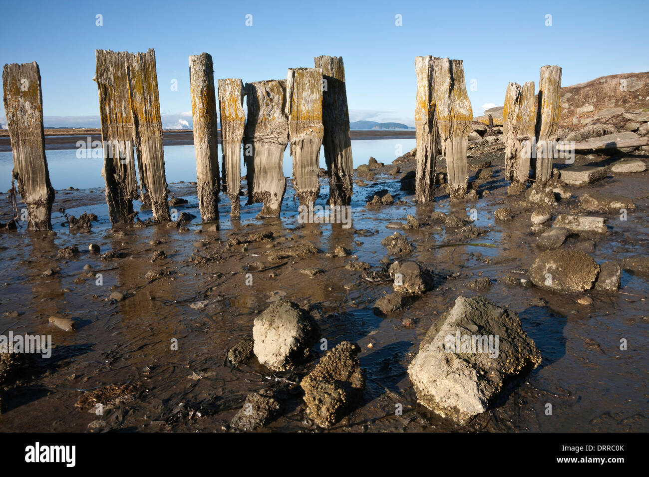 WASHINGTON - Remains of an old structure along the shores of Padilla Bay; a National Estuarine Reserve. - Stock Image