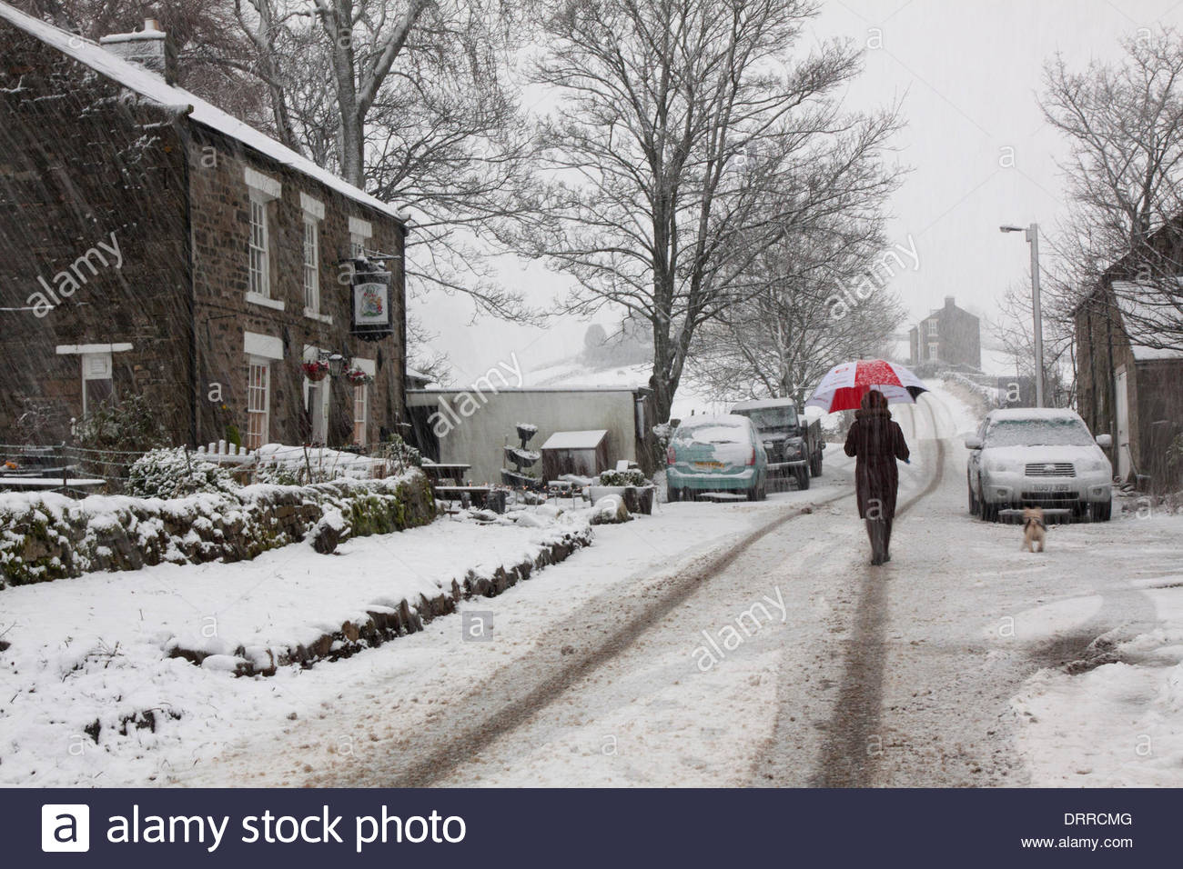 Holwick, Middleton-in-Teesdale, Co Durham, UK. 31st Jan, 2014. A snowstorm hits UpperTeeasdale in the North Pennine Stock Photo