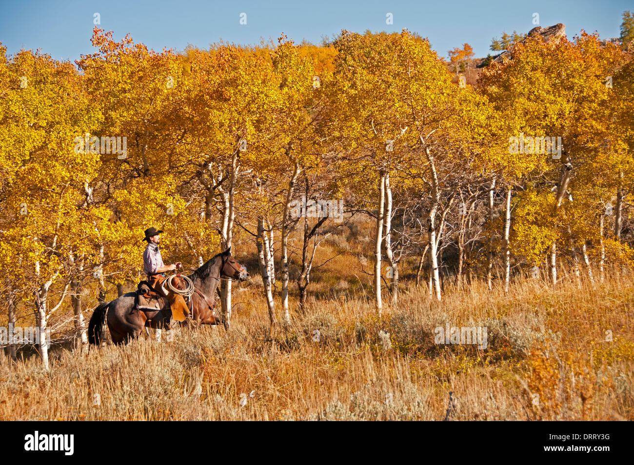 Cowboy on horseback near Aspen trees, Bighorn National Forest, Wyoming Stock Photo