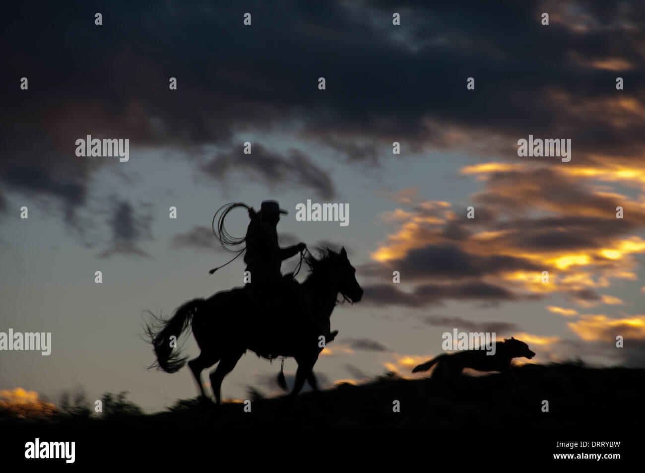 Cowboy with lariat prepares to lasso a horse at dusk,  while a dog runs ahead of him, in the Bighorn Mountains of Wyoming - Stock Image