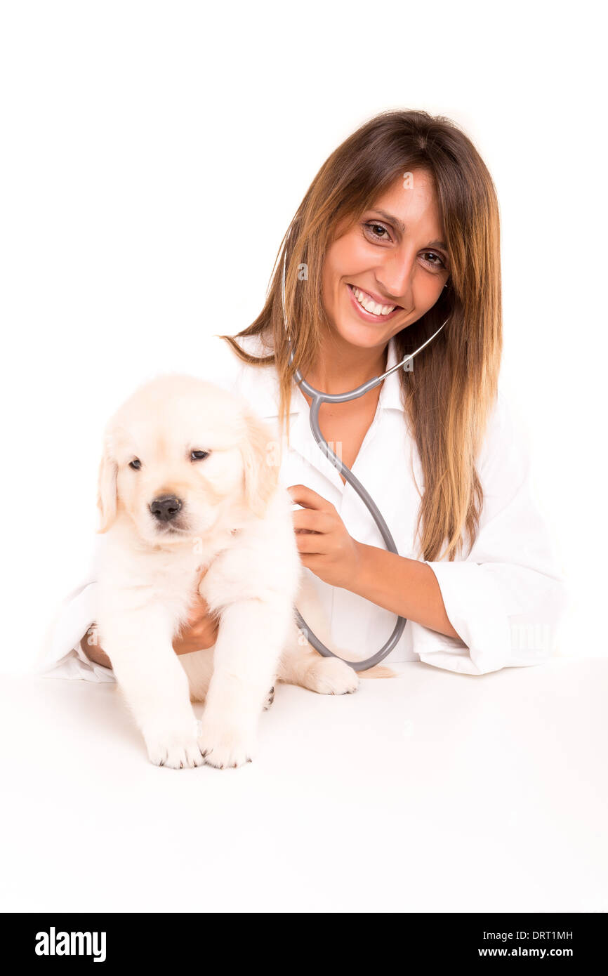 A beautiful veterinarian with a golden retriever puppy - Stock Image