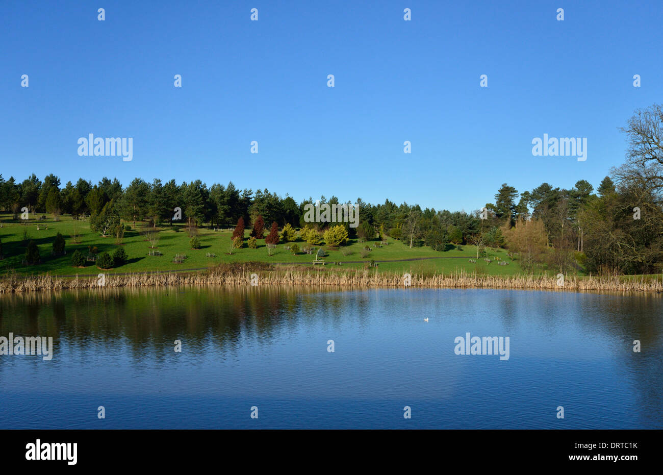 Bedgebury National Pinetum and Forest, Goudhurst, Kent, TN17 2SJ, United Kingdom - Stock Image