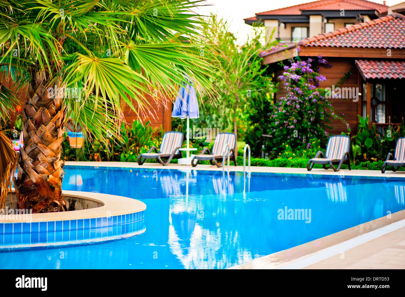 palm tree growing in the midst of the pool - Stock Image
