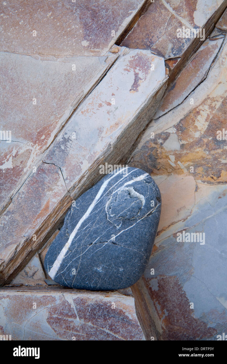 A blue pebble with white veins is wedged in the cracks of red coloured slate rock in the cliffs at Dollar Cove, Cornwall, Englan - Stock Image