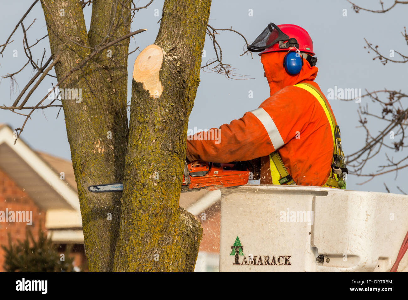 Forestry Workers Stock Photos Amp Forestry Workers Stock