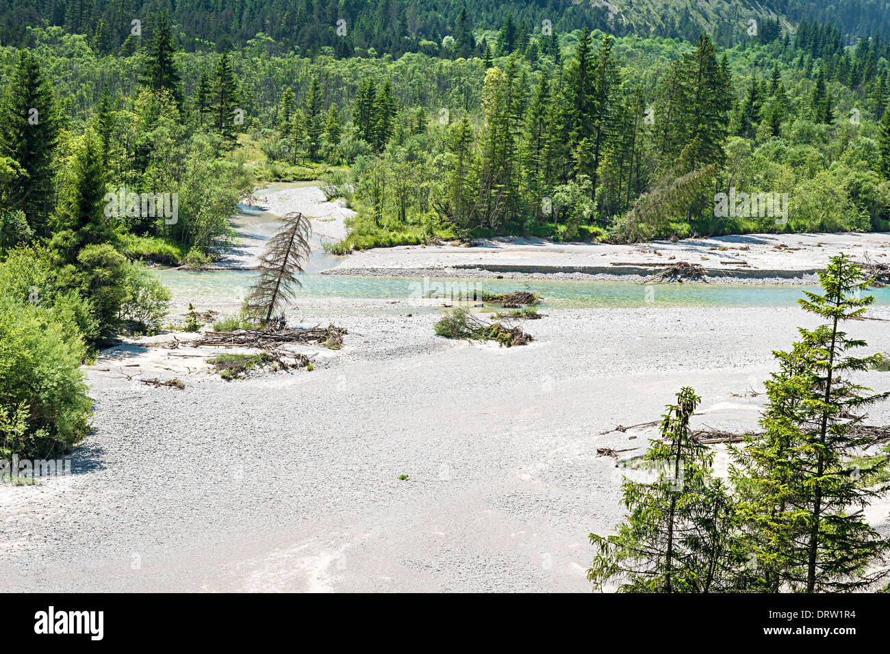 Trees and river named Isar in the alps at Karwendel - Stock Image