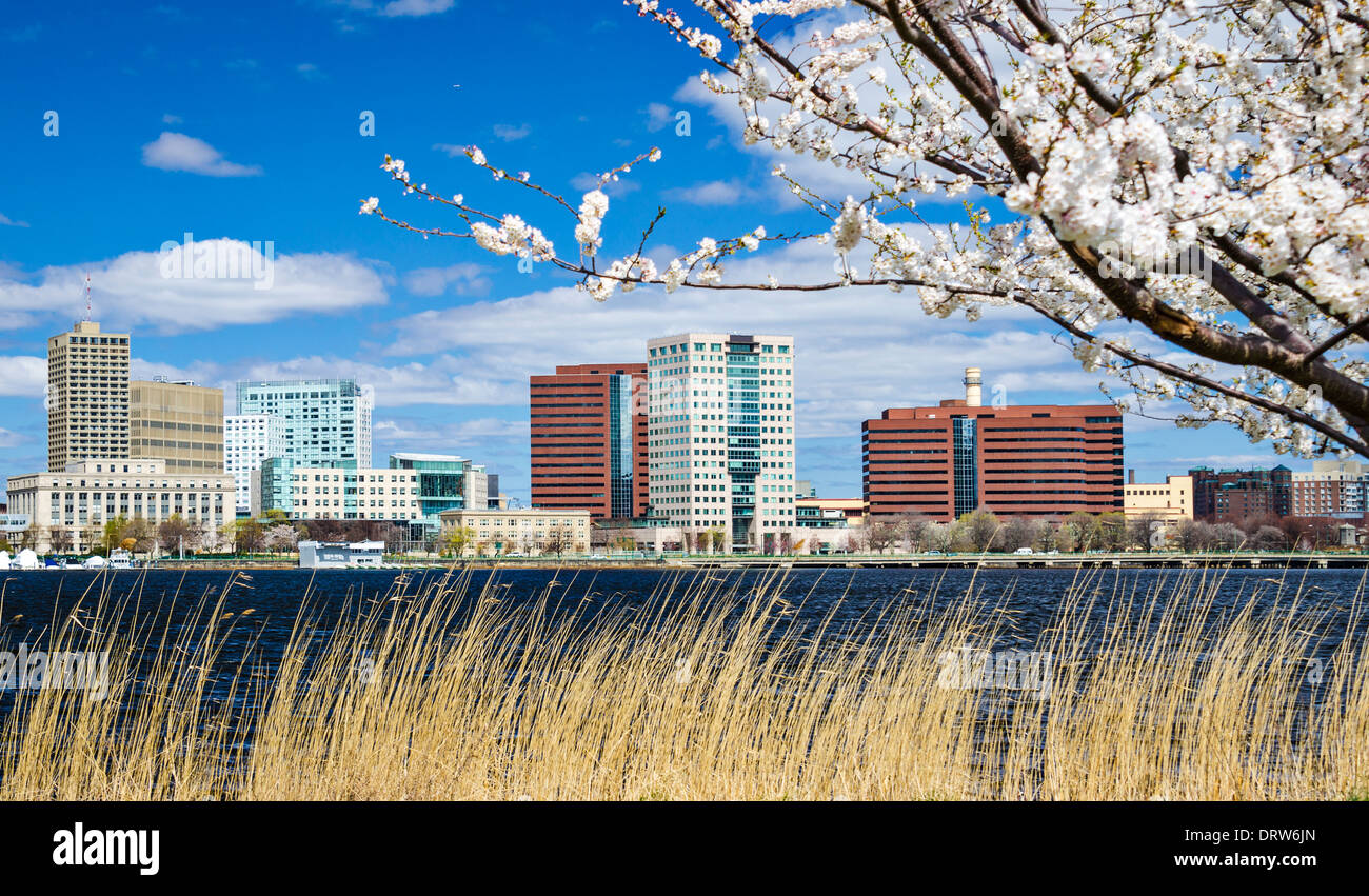 Cambridge, Massachusetts skyline in the spring. - Stock Image