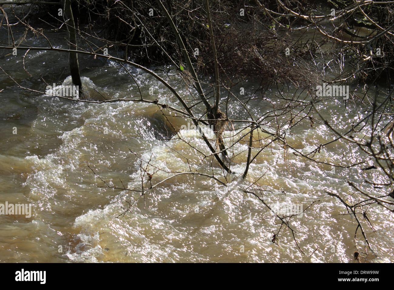 W Finch Leatherhead River Mole Leat...