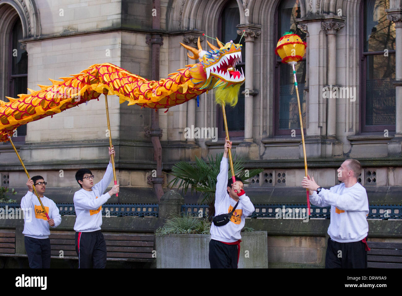 Manchester, Chinatown 2nd February, 2104.  High pole dragon dance at the Chinese New Year in Albert Square, Manchester the North's biggest Chinese New Year celebrations. Manchester's Chinatown is one of Europe's biggest tucked into a narrow grid of streets behind Piccadilly Gardens.  With a 175-foot golden paper dragon, a lion dance, martial arts demonstrations, the Dragon Parade, from the Town Hall to Chinatown,  is one of the highlights of Manchester's annual events calendar. Credit:  Mar Photographics/Alamy Live News. - Stock Image