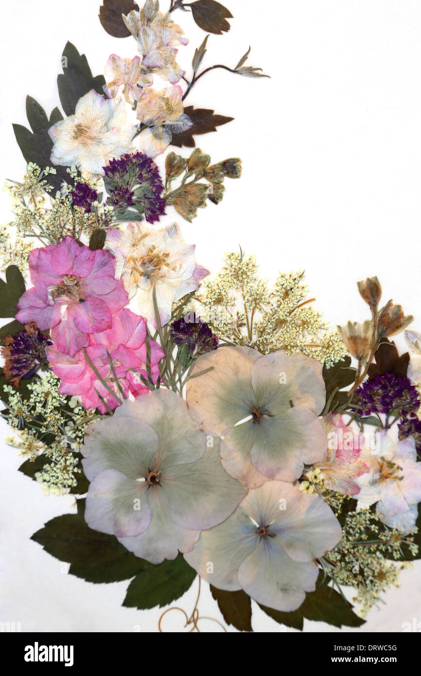 Dried Pressed Flowers In Frame Stock Photo: 66326556 - Alamy