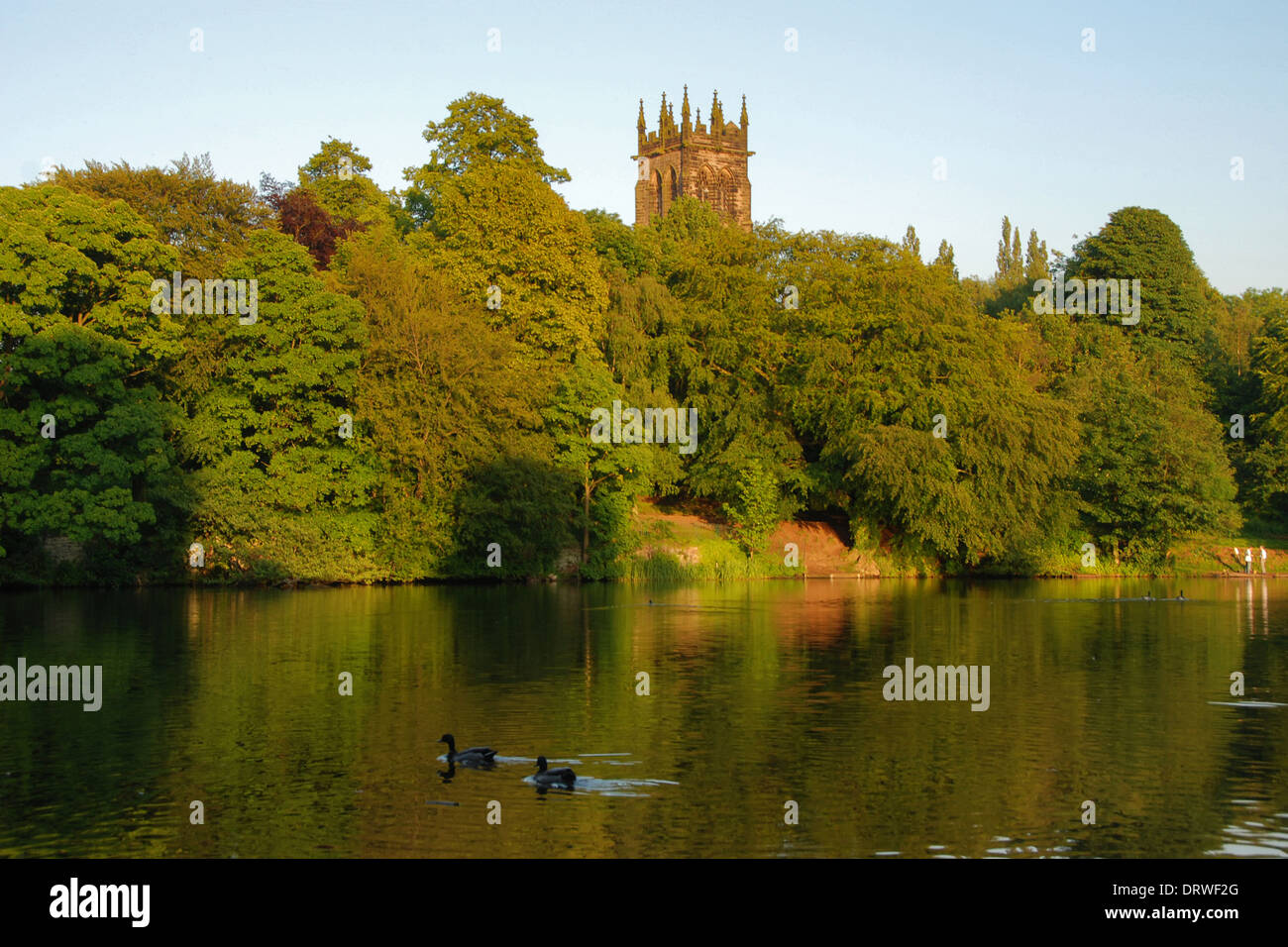 Ducks on the Lymm Dam, in Lymm, Cheshire, with the tower of St Mary's Church in the evening sun - Stock Image