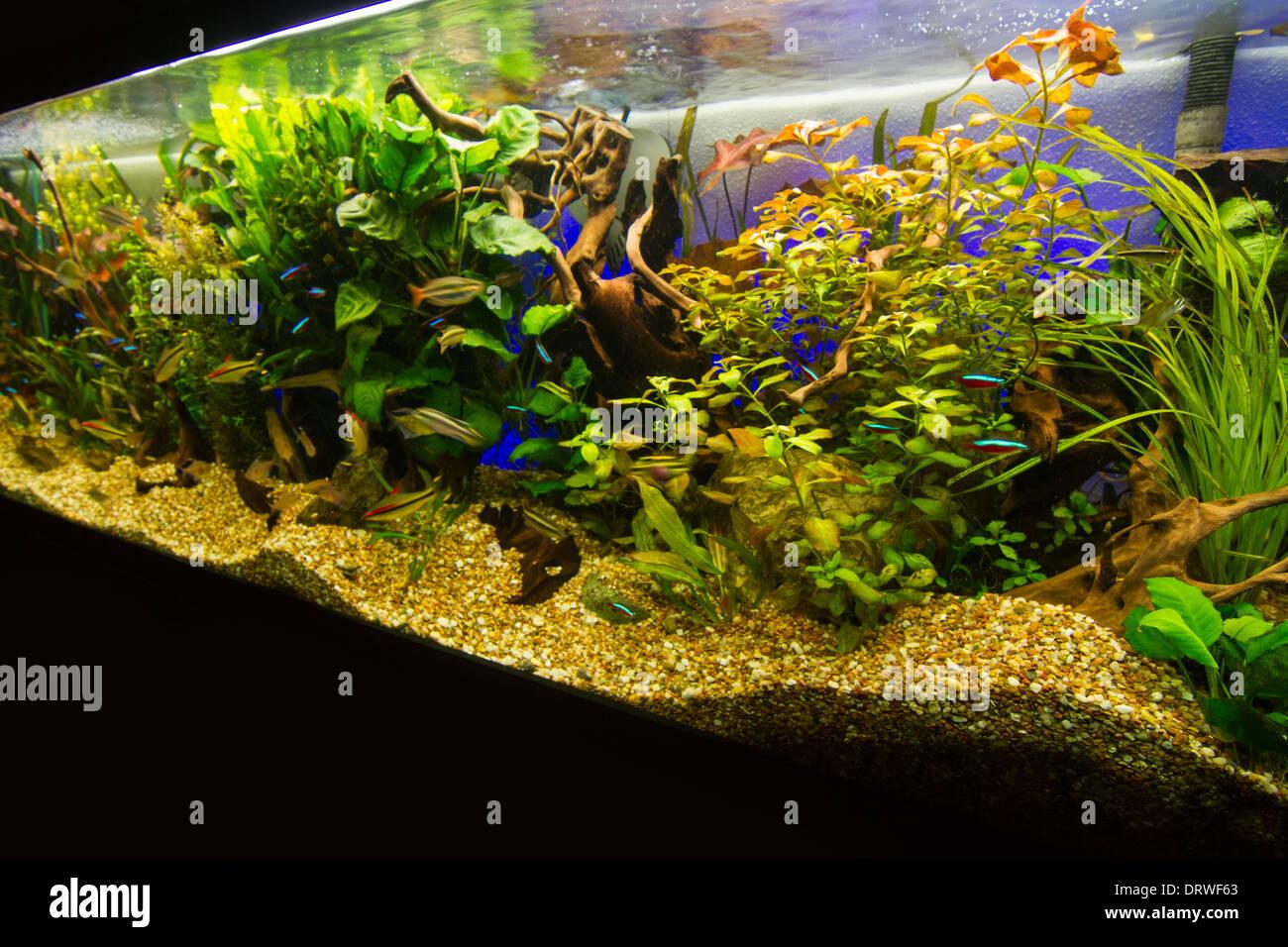 Huge Fish Tank Stock Photos & Huge Fish Tank Stock Images - Alamy