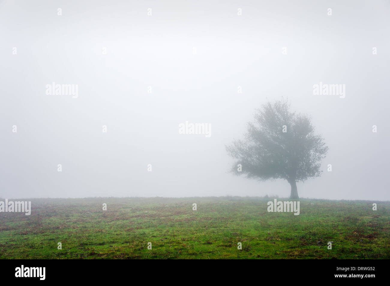 lonely tree with fog and beautiful light - Stock Image
