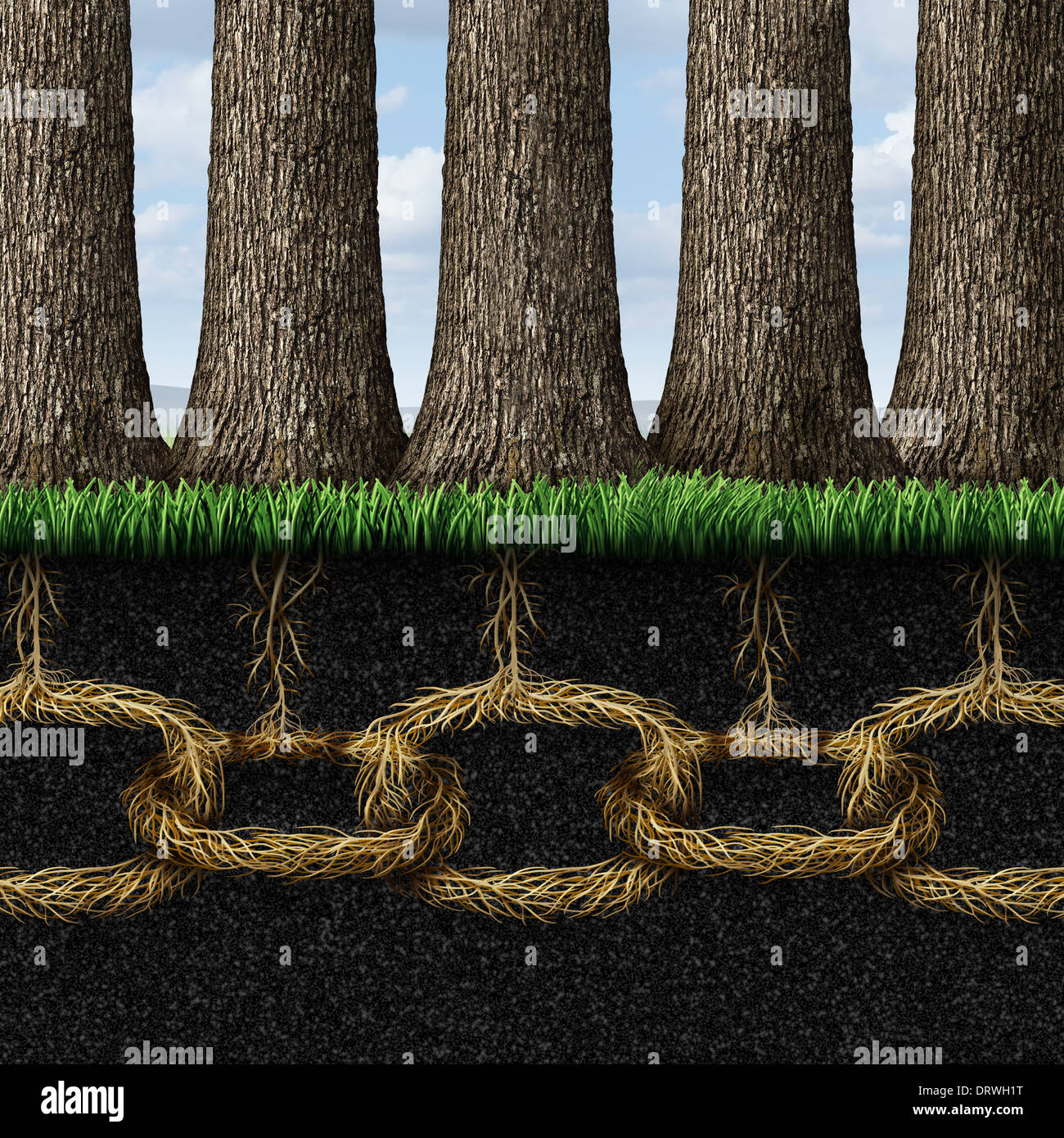 Unbreakable solidarity and teamwork cooperation concept as a group of trees connected underground with strong roots - Stock Image