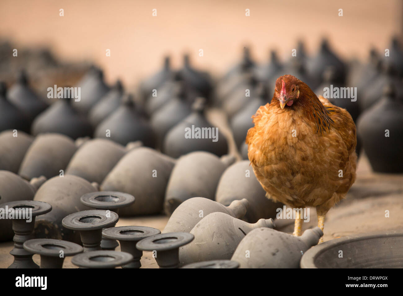 Chicken among the clay products in the village's pottery workshop. - Stock Image