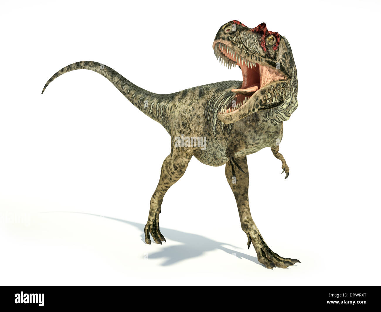 Albertosaurus Dinosaur, photo-realistic and scientifically correct representation, dynamic posture. On white background. - Stock Image