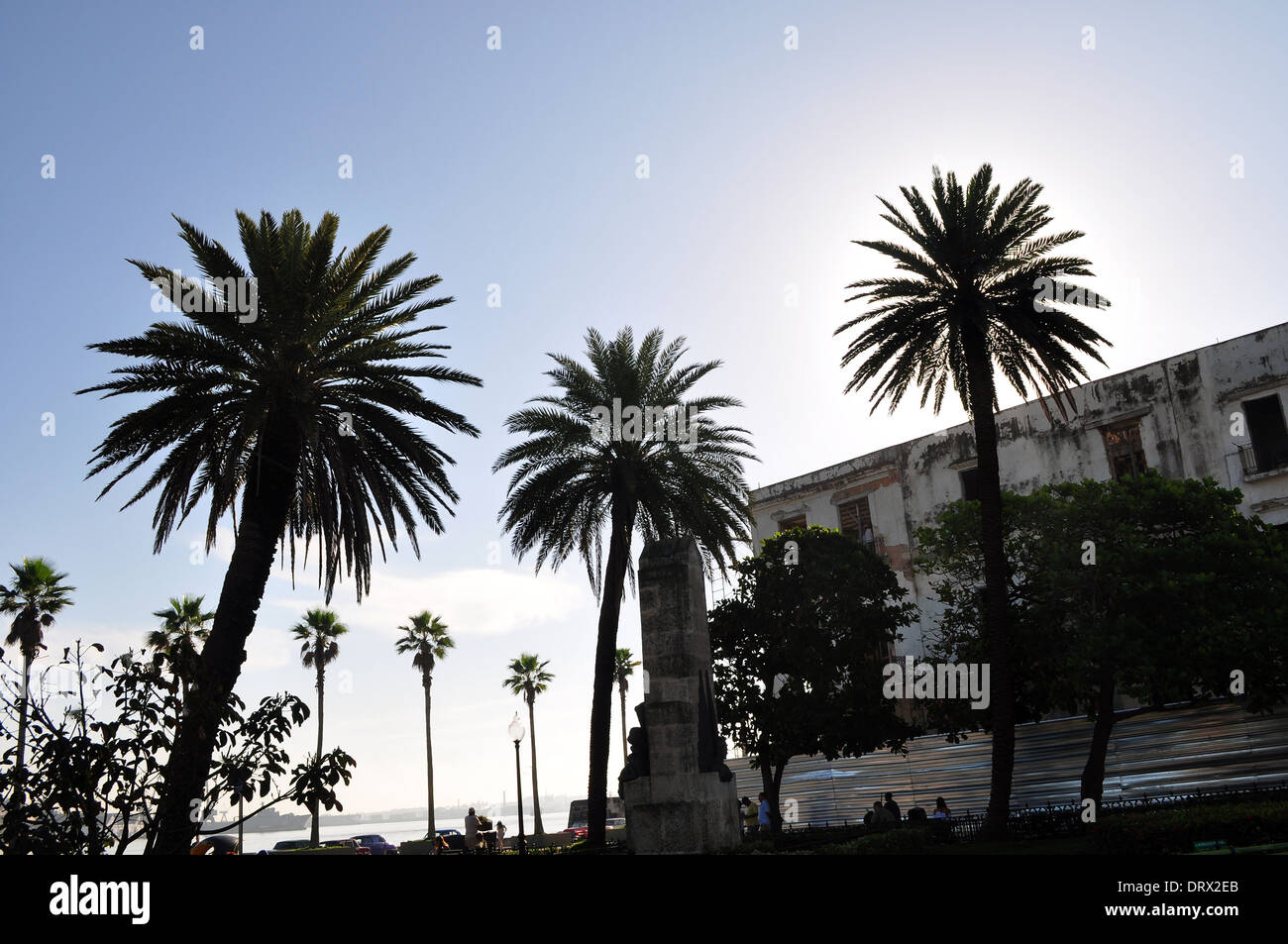 Havana, Cuba: palm trees near the harbor - Stock Image