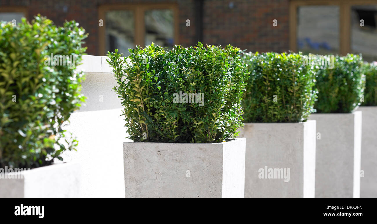 Row of potted plants. - Stock Image