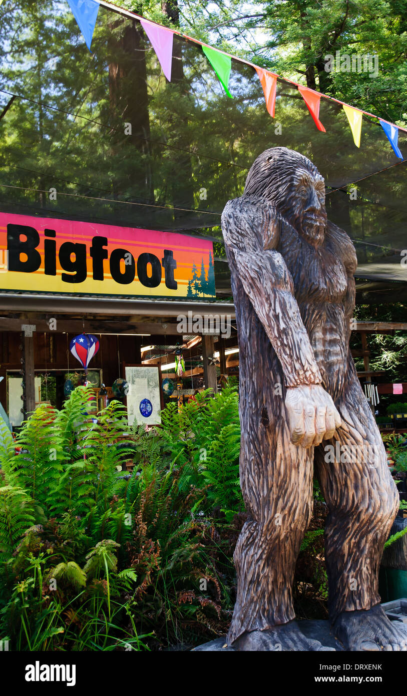 Sasquatch (Bigfoot) Statue In Redwood Forest Of Northern California