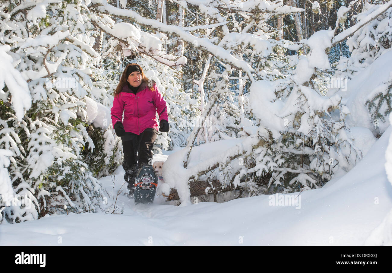 A woman snowshoes in the back country in winter. - Stock Image