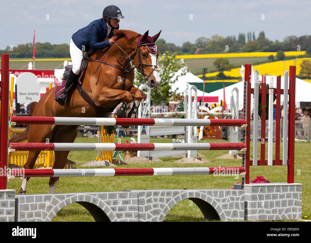 Action from the Showjumping Ring at the 2013 Herts County Show - Stock Image