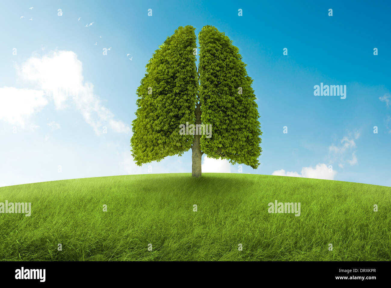 Tree with form of lungs, oxygen for the earth - Stock Image