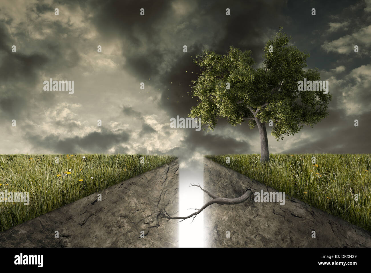 A deep track divides the earth, a tree reunites them - Stock Image