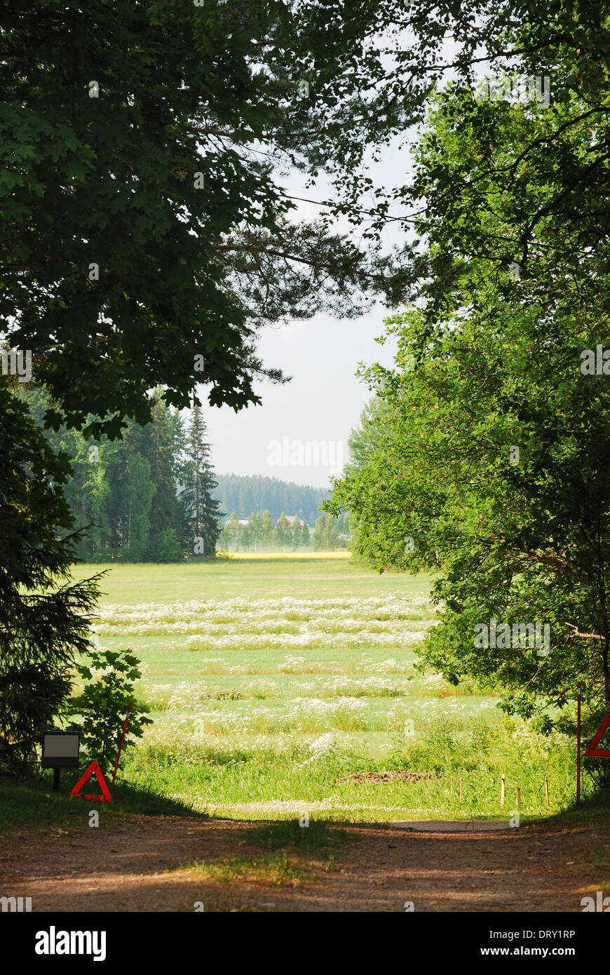 Hayfield through clearing in the woods - Stock Image
